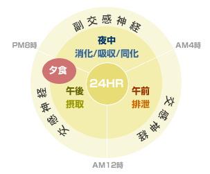 1日のサイクル円グラフ.jpg