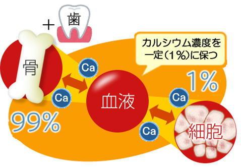 1%のカルシウム.jpg