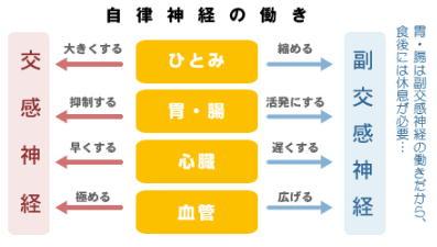 交感、副交感神経の働き図.jpg