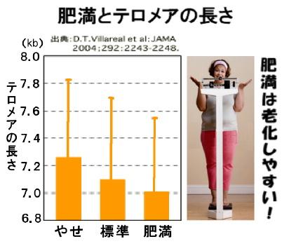 肥満とテロメア+女性.jpg