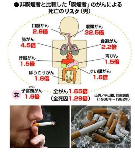 たばこ がんの死亡リスク.jpg