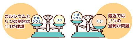 カルシウムとリン.jpg