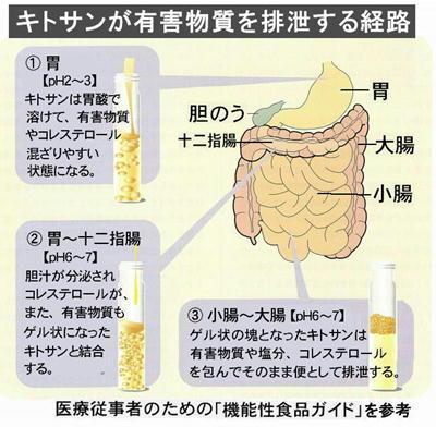 キトサンが有害物質を排出する経路.jpg