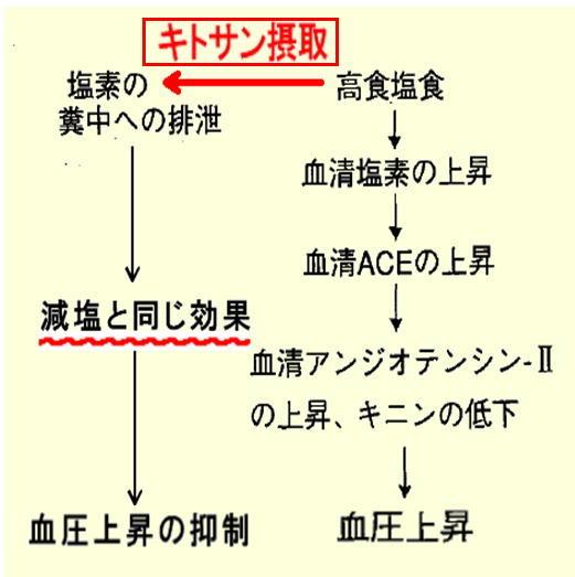 キトサン摂取と血圧抑制.jpg