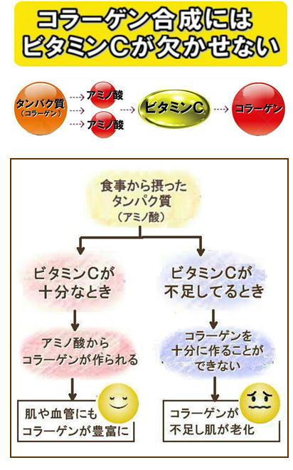 コラーゲン合成にビタミンC.jpg