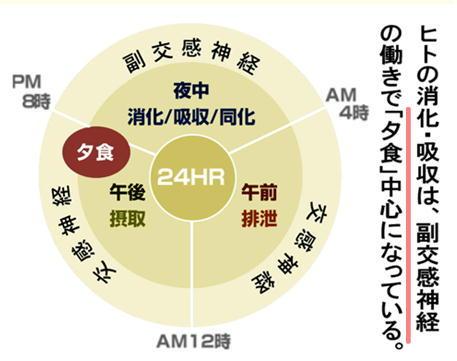 交感神経・副交感神経 24h.jpg