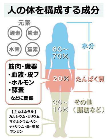 人体を構成する成分.jpg