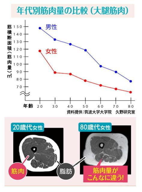 年代別筋肉量の比較.jpg