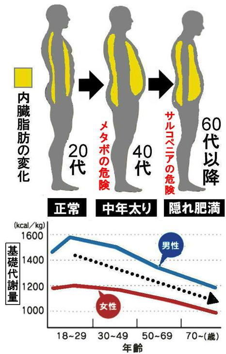 年齢と基礎代謝、内臓脂肪.jpg