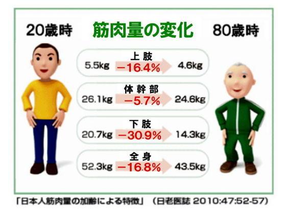 年齢と筋肉量の変化.jpg