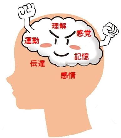 脳の機能.jpg