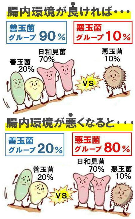 腸内環境、良い、悪い.jpg