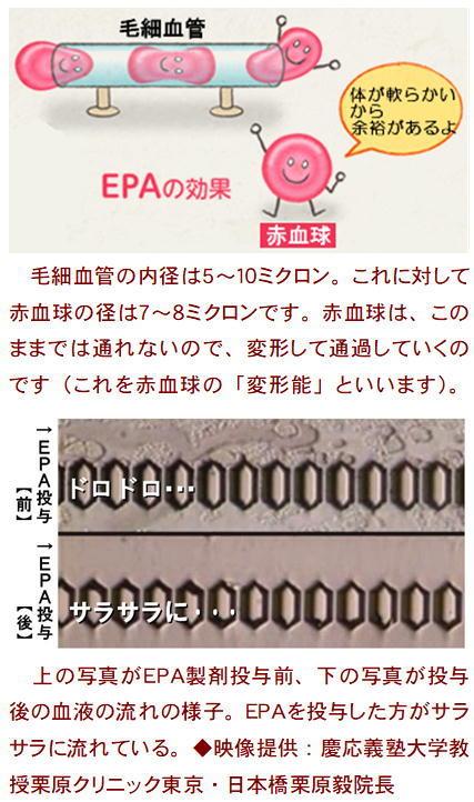 赤血球の変形能.jpg