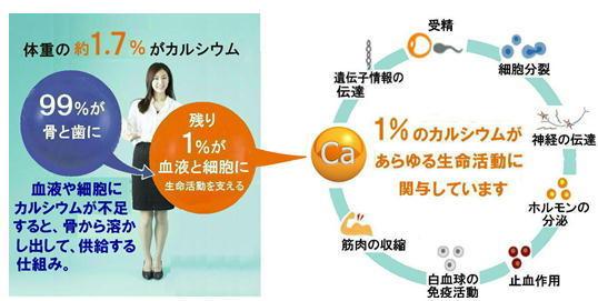 1%のカルシウムの作用.jpg