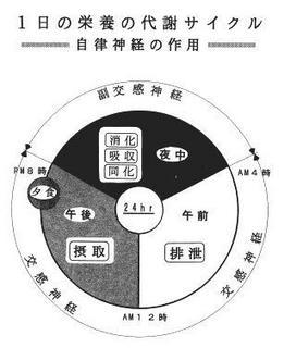 自律神経の円.jpg