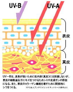 紫外線AB.jpg