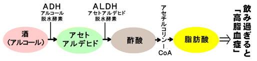 お酒⇒高脂血症.jpg