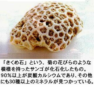 きくめ石サンゴ.jpg