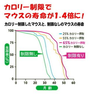 カロリー制限グラフ.jpg