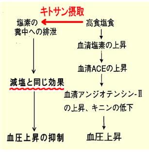 キトサンの減塩効果フロー.jpg