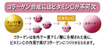 コラーゲン合成にはビタミンCが不可欠.jpg