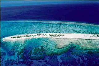 サンゴの海.jpg