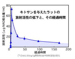 ラットの放射活性低下.jpg