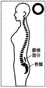体の正しいラインイラスト.jpg