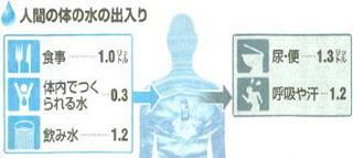 体内の水代謝.jpg