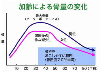 加齢骨量の変化.jpg