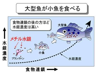 大型魚が小魚を食べる.jpg