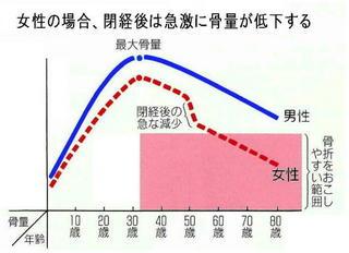 女性の骨量グラフ.jpg
