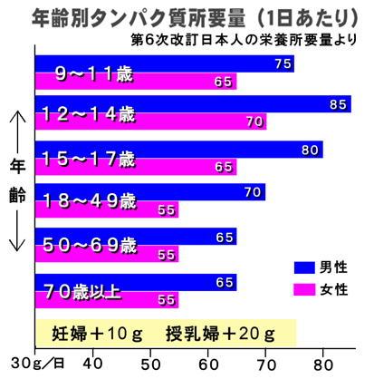 年齢別タンパク質所要量.jpg