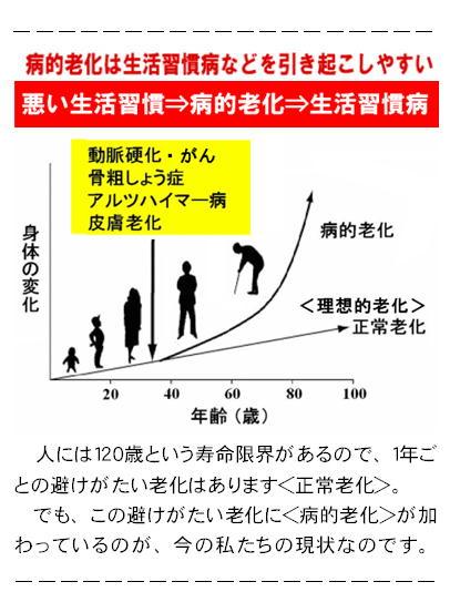 年齢−身体の変化グラフ.jpg