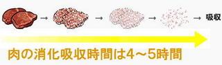 肉の消化時間.jpg