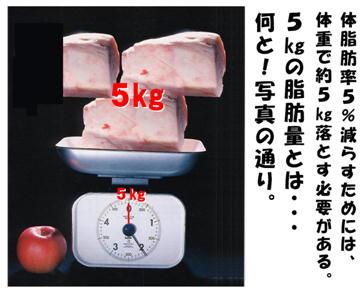 脂肪5�s.jpg