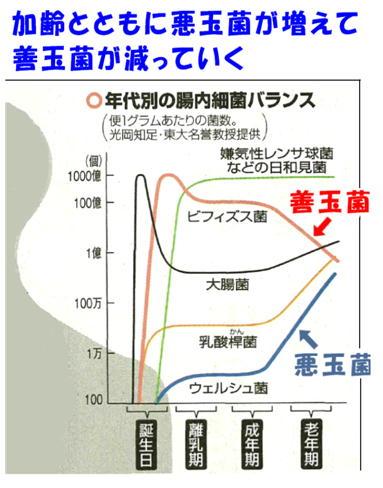 腸内細菌の変化グラフ.jpg