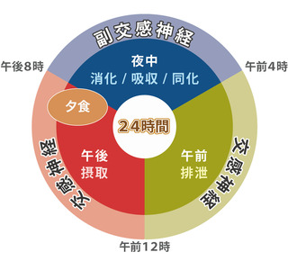 自律神経円グラフ.jpg
