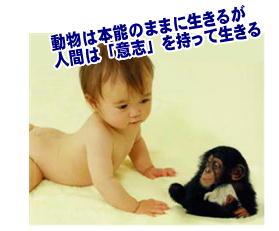 赤ちゃんとチンパンジー.jpg