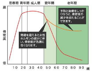 骨量のグラフ.jpg