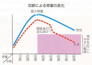 骨量グラフ.jpg