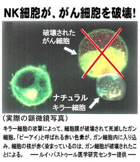 NK細胞.jpg