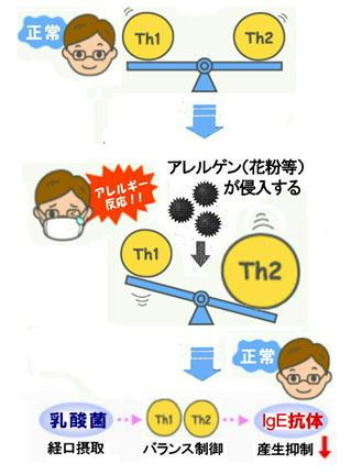 Th1、Th2のバランスの崩れ.jpg