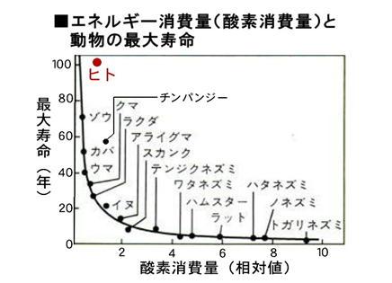 エネルギー消費と最大寿命.jpg